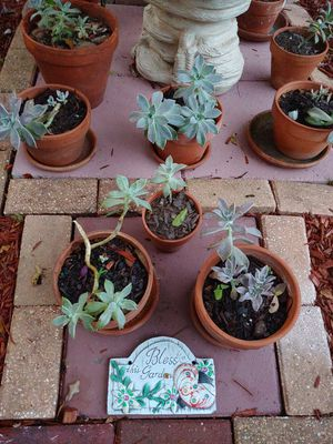 Succulent family clay pots for Sale in Tampa, FL