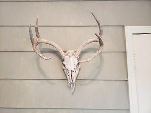 Whitetail deer skull for Sale in Plainville, CT