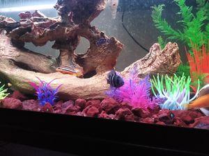 Free fish tank for Sale in UPR MARLBORO, MD