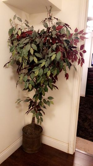 Fake plant for house for Sale in Fresno, CA