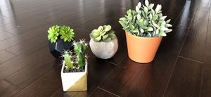 Succulents for Sale in Rockville, MD