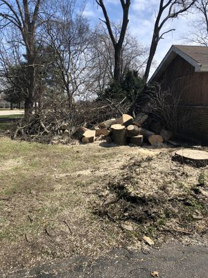 Free Fresh Cut Maple for Sale in Chicago, IL