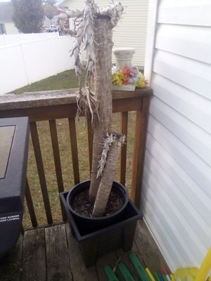 Tree/plant with planter for Sale in Imperial, MO