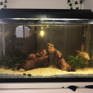 30 gallon fish tank for Sale in Newburgh Heights, OH