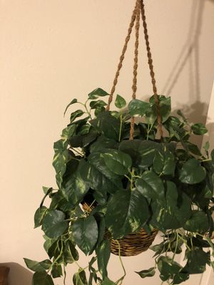 Plastic hanging potted plant for Sale in Atascocita, TX