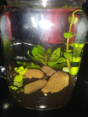 FISH TANK DECORANT I DECORATE TANKS READ DESCRIPT!! for Sale in Parma, OH