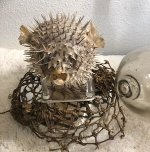 VINTAGE TAXIDERMY BLOW FISH 🐡 ODDITIES NAUTICAL BEACH OCEAN THEMED HOME DECOR COLLECTIBLE 🐡🐡🐡 for Sale in Tempe, AZ