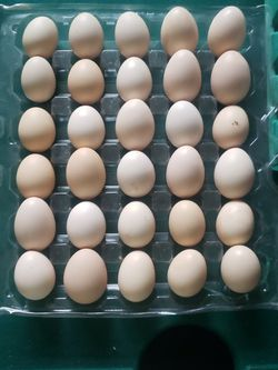 Alakina egg for Sale in Antioch,  CA