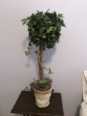 Ivy topiary for Sale in Houston, TX