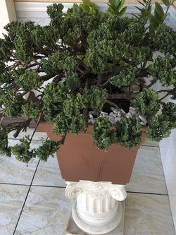 Bonsai Tree for Sale in Baldwin Park,  CA