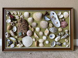 Seashells framed for Sale in Spokane, WA