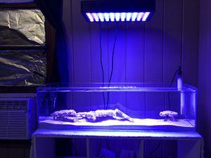 Aquamaxx 12g long saltwater aquarium. for Sale in Pavo, GA
