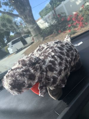 T-Red Pillow Pet Pee Wee for Sale in Moreno Valley, CA