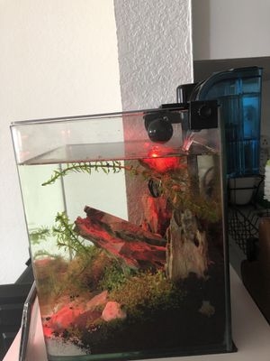 Little fish tank for Sale in Miami, FL