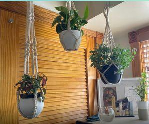"Brand NEW Bouqlife Macrame Plant Hangers no Tassel Set of 3 Indoor Hanging Planter Basket Plant Holder with Hook Gift Box 34"" / 22"" / 20"" for Sale in Houston,  TX"