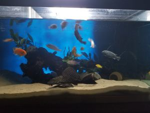 75 gal fish tank (Tank & Stand Only) for Sale in Piscataway, NJ