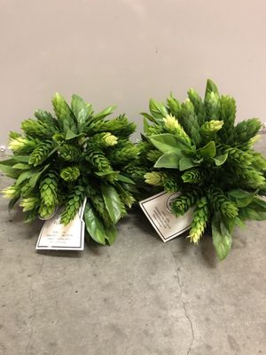 Faux Silk Plants for Sale in Los Angeles, CA