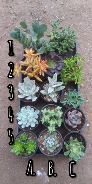 Succulents plants $ 3 for Sale in San Marcos, CA