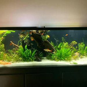 180 Gallon Tank, Stand And Sump for Sale in North Las Vegas, NV