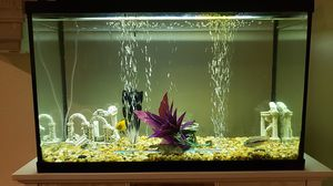 40 gallon fish tank for Sale in Seattle, WA