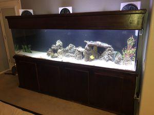 260 gallon acrylic aquarium for Sale in Avondale, AZ