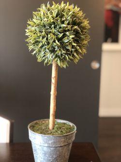 Topiary for Sale in Dallas,  TX