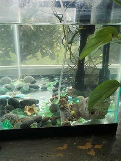 10 Gallon Fish Tank for Sale in Olympia,  WA