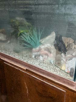 159 Gallon Fish Tank. for Sale in Westley,  CA