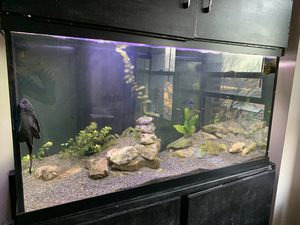 90 gallon tank full set for Sale in Chicago, IL
