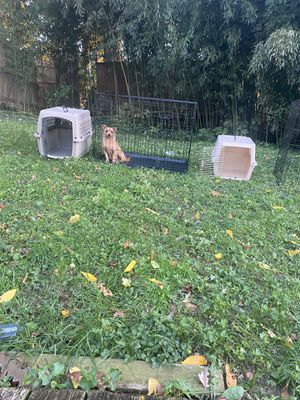 Dog crate /Cages for sale for Sale in Washington, DC
