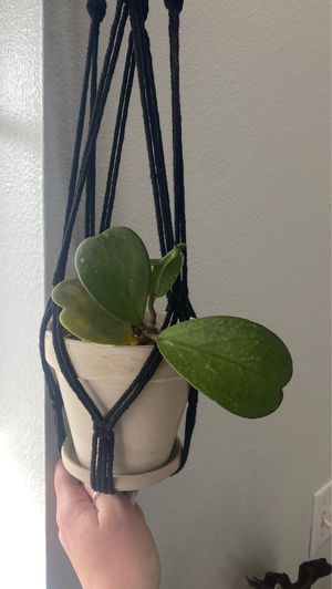 sweetheart hoya plant for Sale in Colorado Springs, CO