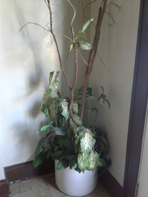 cute fake plant for Sale in Lakewood, OH