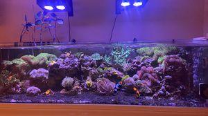 Reef tank for Sale in Toms River, NJ