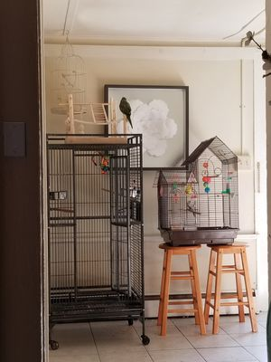 Bird cage for Sale in Butler, NJ