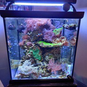 Live Saltwater Reef Aquarium Rock for Sale in Snohomish, WA