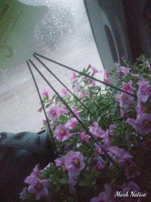 Plants half off for Sale in Colorado Springs, CO
