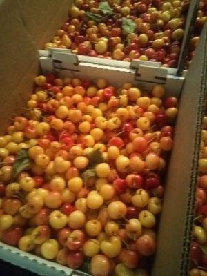 Recently picked Rainier Cherry for Sale in Stockton, CA