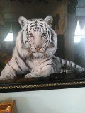 Tiger for Sale in Pine Ridge, FL