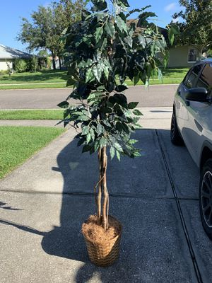 Fake Plants (5ft-6ft tall) for Sale in Alafaya, FL