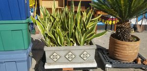 Plants for Sale in Los Angeles, CA