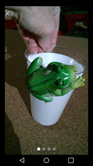 Pot hugging frog for Sale in UPPER ARLNGTN, OH
