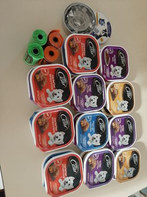 Dog support and everything for 20 for Sale in Waukegan, IL