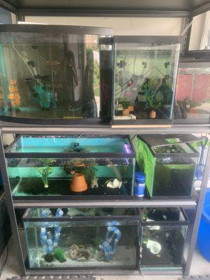 Aquariums,filters , pumps, etc for Sale in Menifee, CA