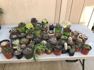 ASSORTED SUCCULENT SALE !!!! for Sale in South Gate, CA