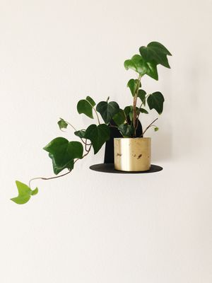 Ivy live plant for Sale in Vancouver, WA