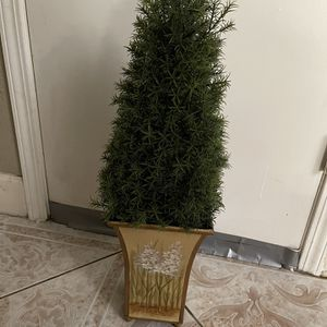 very nice tree in good condition for Sale in Riverbank, CA