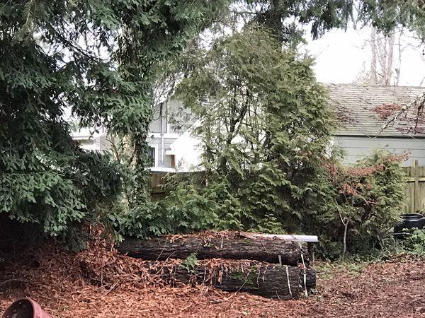 Tree cutting need it