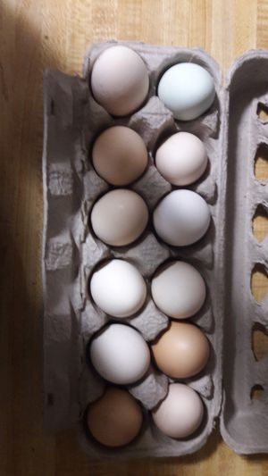 Fresh eggs for sale for Sale in Corning, CA