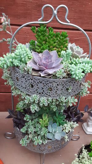 2 feet tall planter with succulent plants for Sale in La Mirada, CA