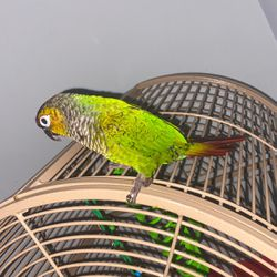 Parrot And Cage For Sale for Sale in Gainesville,  FL